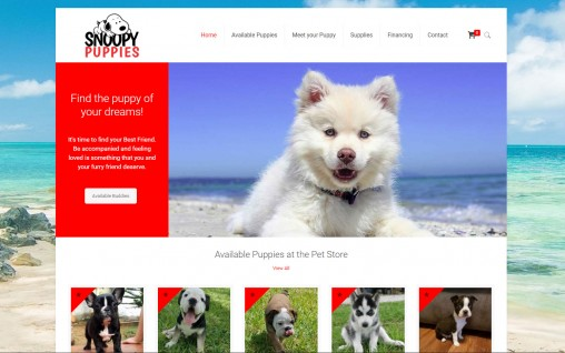 Snoopy Puppies – Fort Lauderdale, Florida